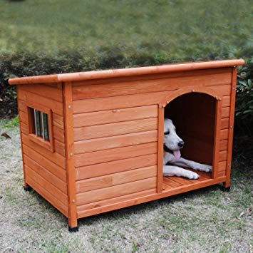 Top-class Dog House Review - Post Thumbnail